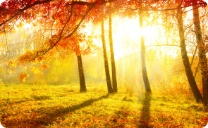 Image of sunlight through the trees