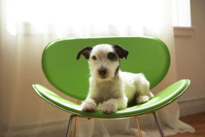 photo of dog sat on a green chair