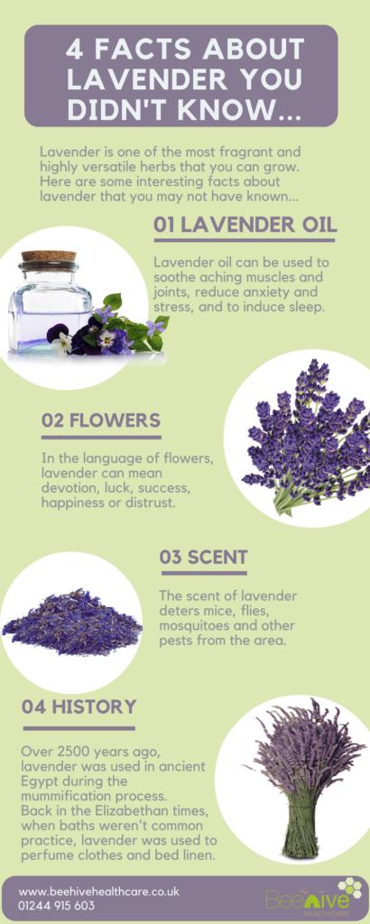 Lavender Facts