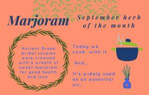 Marjoram Aromatherapy Oil
