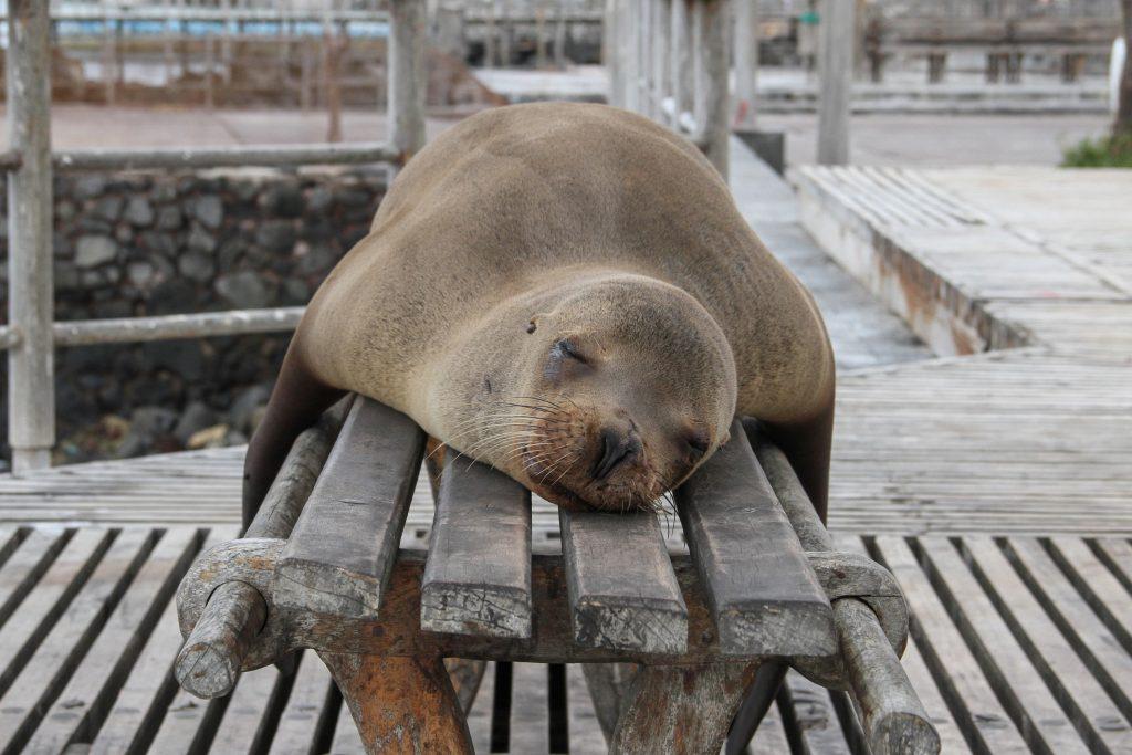 mindfully asleep like a sea lion