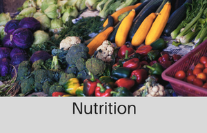 Nutrtitional services at beehive healthcare
